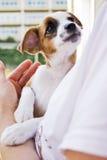 Mujer que sostiene un perro Foto de archivo libre de regalías