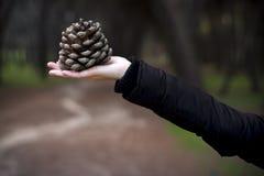 Mujer que sostiene un pinecone Foto de archivo