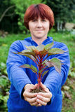 Mujer que sostiene una planta de semillero en sus manos. Fotografía de archivo