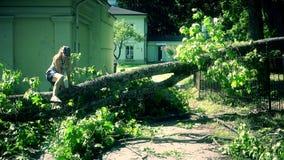Mujer que sube sobre árbol caido en la entrada de la yarda de la casa metrajes