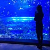 Mujer que toma una foto en el acuario Fotos de archivo libres de regalías