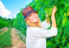 Mujer que trabaja en campo de la uva Fotos de archivo