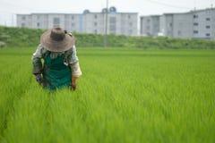 Mujer que trabaja en los campos Fotografía de archivo libre de regalías