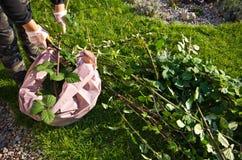 Mujer que trabaja en un jardín, cortando exceso de ramitas de plantas fotografía de archivo libre de regalías