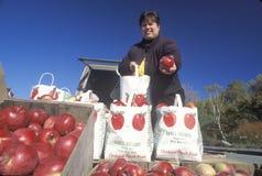 Mujer que vende manzanas Fotos de archivo libres de regalías