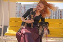Mujer redheaded feliz bonita con dos pocos perros en el banco amarillo del verano imágenes de archivo libres de regalías