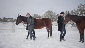 Mujer rubia y hombre alto que llevan dos caballos marrones en el rancho del invierno de la nieve La muchacha consiguió un caballo almacen de metraje de vídeo