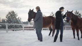 Mujer rubia y hombre que llevan dos caballos marrones en el rancho del invierno de la nieve Un animal paró y quiere ir más lejos  almacen de metraje de vídeo