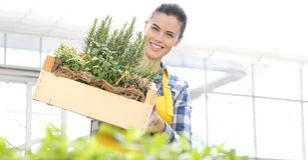 Mujer sonriente con la caja de madera por completo de hierbas de la especia en el fondo blanco, jardín de la primavera imagen de archivo libre de regalías