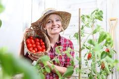 Mujer sonriente en el huerto, mostrando la cesta de mimbre por completo de tomates de cereza imagen de archivo libre de regalías