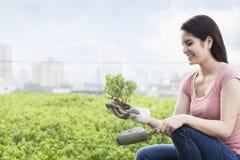 Mujer sonriente joven que cultiva un huerto y que sostiene una planta en un jardín del top del tejado en la ciudad Imagenes de archivo