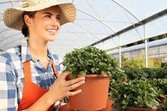 Mujer sonriente que trabaja en invernadero, con una planta a disposición imagenes de archivo