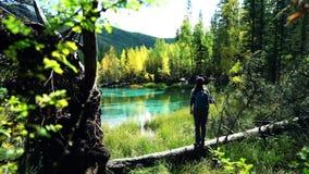 Mujer turística con los soportes de la mochila y del sombrero en un árbol caido por el lago azul de la montaña en el bosque almacen de metraje de vídeo
