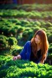 Mujer turística de Asia en la granja vegetal en la montaña Thaila del angkhang Imagen de archivo libre de regalías