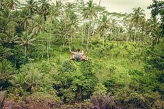 Mujer turística joven que balancea en el acantilado en la selva tropical de la selva de una isla tropical de Bali, Indonesia Imagen de archivo