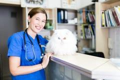 Mujer veterinaria con el gato imagen de archivo libre de regalías