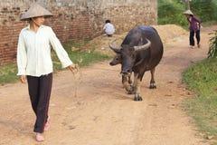 Mujer vietnamita con el búfalo de agua Imagenes de archivo