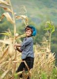 Mujer vietnamita que trabaja en campo de maíz en el norte de Vietnam Fotos de archivo libres de regalías