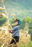 Mujer vietnamita que trabaja en campo de maíz en el norte de Vietnam Imagenes de archivo