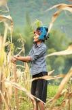 Mujer vietnamita que trabaja en campo de maíz en el norte de Vietnam Foto de archivo