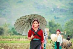 Mujer vietnamita que trabaja en campo de maíz en el norte de Vietnam Foto de archivo libre de regalías
