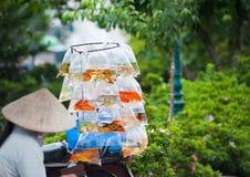 Mujer vietnamita que vende pescados del acuario Imágenes de archivo libres de regalías