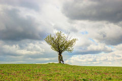 Mujer y árbol solo Foto de archivo libre de regalías