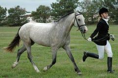 Mujer y caballo foto de archivo libre de regalías