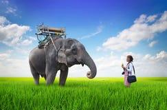 Mujer y elefante Imagenes de archivo