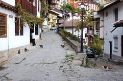 Mujer y gatos en la calle de Gurko Fotos de archivo libres de regalías