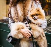 Mujer y perro en Milán, Italia Fotos de archivo