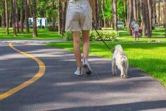 Mujer y perro que caminan en un parque Foto de archivo libre de regalías