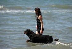 Mujer y perros en el mar Fotografía de archivo