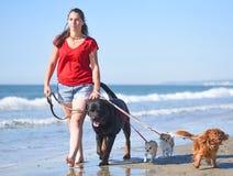 Mujer y perros en la playa Imágenes de archivo libres de regalías