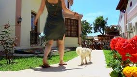 Mujer y mujer que camina del perro que camina a través de un campo con su perro almacen de video
