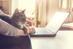 Mujer y su gato que trabajan en un ordenador portátil Imagen de archivo libre de regalías
