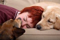 Mujer y sus perros de animal doméstico Imagen de archivo libre de regalías