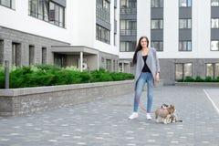 Mujeres atractivas jovenes que caminan con el perrito de dos perros esquimales en la calle foto de archivo libre de regalías