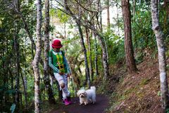 Mujeres de Papá Noel que caminan en bosque con el perro Fotos de archivo