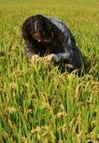 Mujeres en campo del arroz Foto de archivo libre de regalías