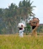 Mujeres en paddie del arroz Imágenes de archivo libres de regalías