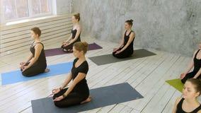 Mujeres jovenes hermosas que se resuelven haciendo ejercicio de la yoga almacen de video