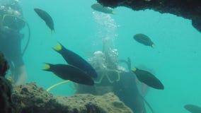 Mujeres jovenes que nadan el salto con el cilindro de oxígeno en laguna cristalina imponente en la isla exótica 1920x1080 metrajes