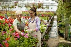 Mujeres mayores y jovenes que trabajan junto en jardín de flores en el sunn Imagen de archivo