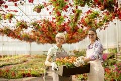 Mujeres mayores y jovenes que trabajan junto en jardín de flores en el sunn Fotografía de archivo