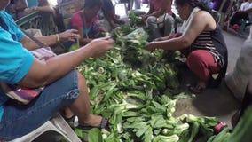 Mujeres que limpian la col de China overhead metrajes