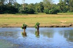 Mujeres que llevan el canal de las ramitas el río en Nepal imagenes de archivo