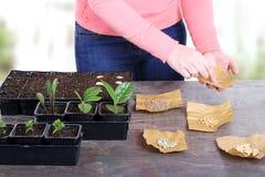 Mujeres que plantan las semillas vegetales en invernadero Foto de archivo libre de regalías