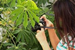 Mujeres que toman imágenes en la naturaleza de la cámara retra Fotos de archivo