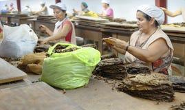 Mujeres que trabajan en una fábrica del cigarro Imagenes de archivo